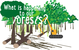 What is happening to our forests?
